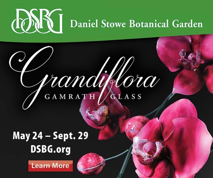 DSBG Grandiflora