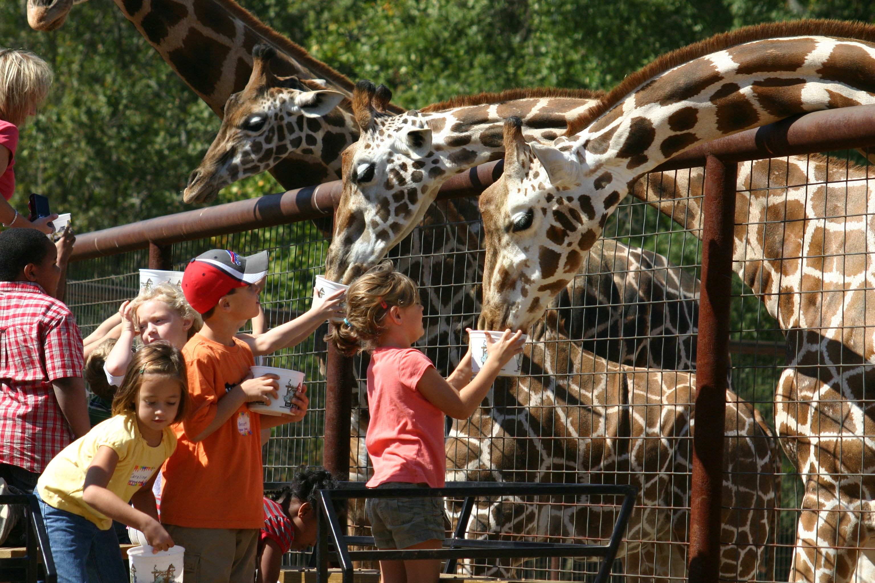 18 Must Do Experiences For Kids In Charlotte